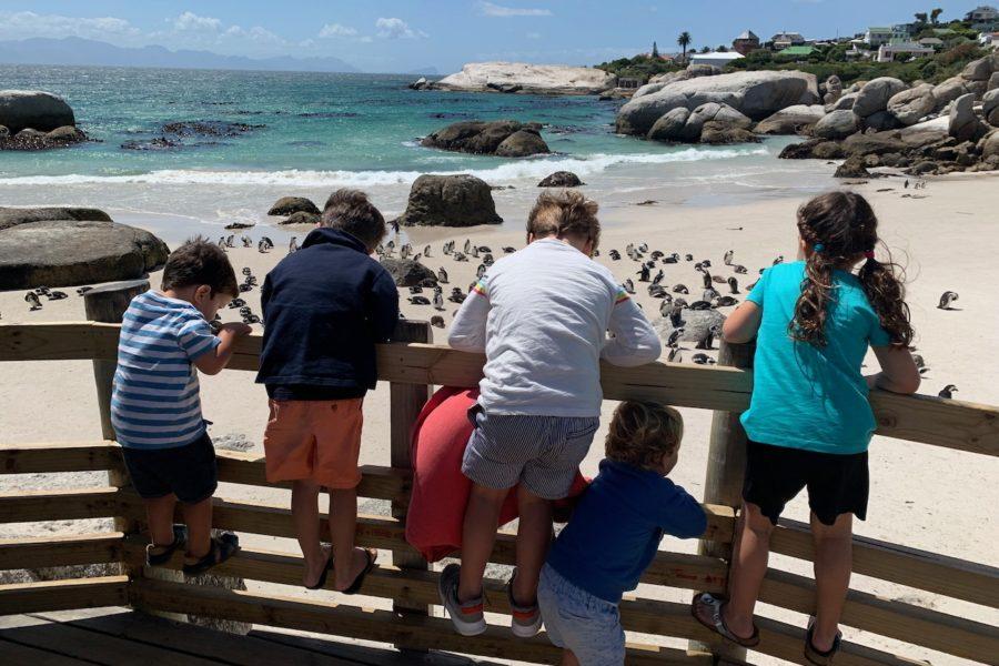 Cape Town Adventure