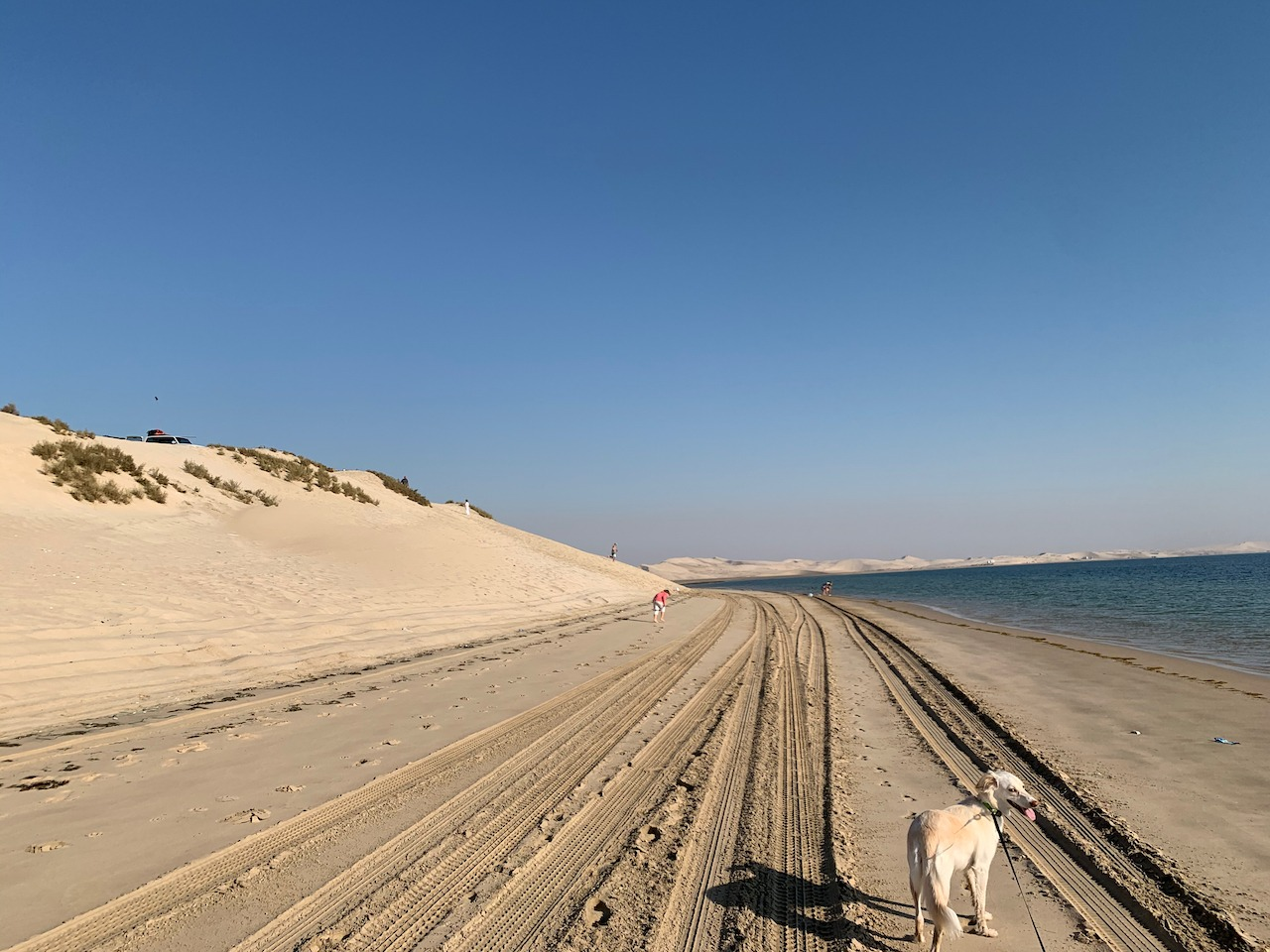 Tracks at the edge of the dunes
